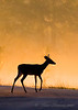 Deer with foggy sunrise