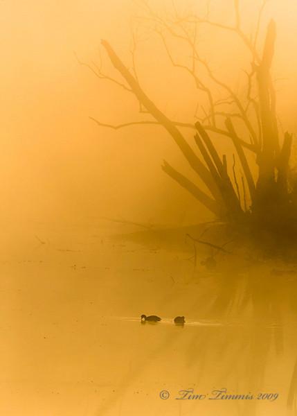Foggy sunrise 1