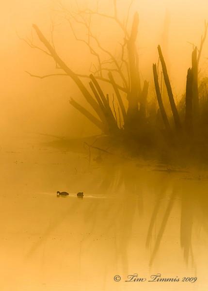 Foggy sunrise at 40 Acre Lake