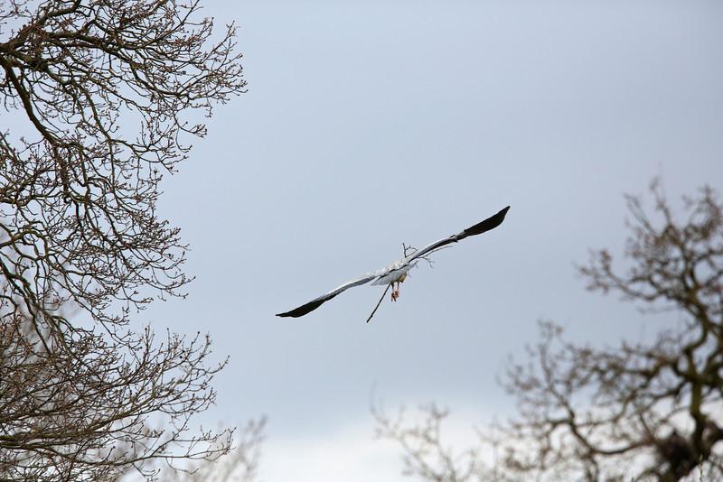 heron 2013-04-19 at 11-01-04
