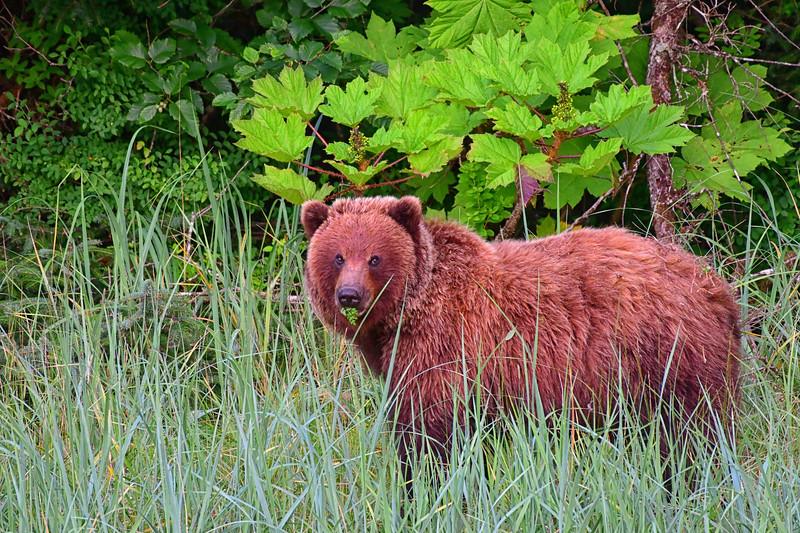 Beautiful Bear