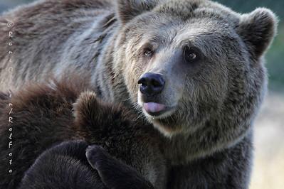 Bjørnemor