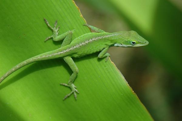 Wildlife - Bugs & Reptiles