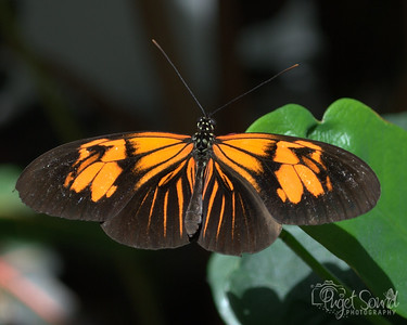Butterfly Exhibit at Pacific Science Center in Seattle, Washington