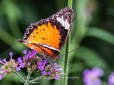 Brookside Gardens 14 July 2019-4931