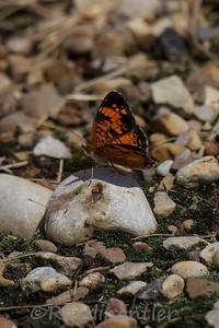 Butterfly081114_001