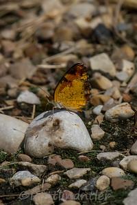 Butterfly081114_002