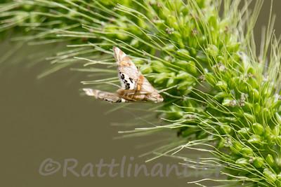 Moth090713_001