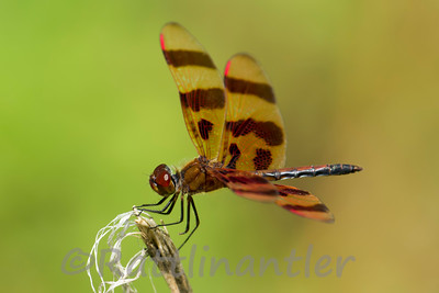 Halloween Pennant - Adult Male