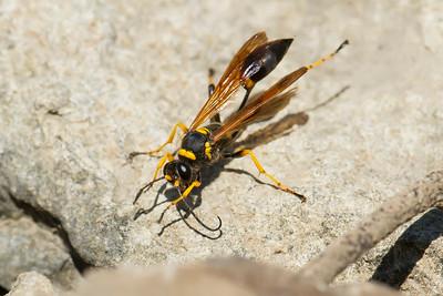 Wasp080313_003