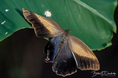 Middleton Butterflies-6575