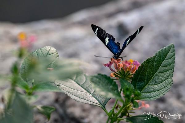 Middleton Butterflies-6535