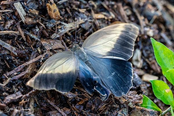 Middleton Butterflies-6544-Edit