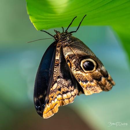 Middleton Butterflies-6508