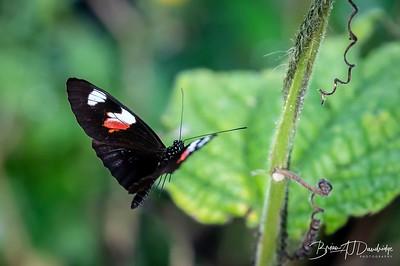 Middleton Butterflies-6578