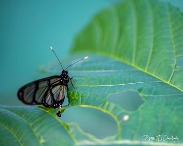 Middleton Butterflies-6526