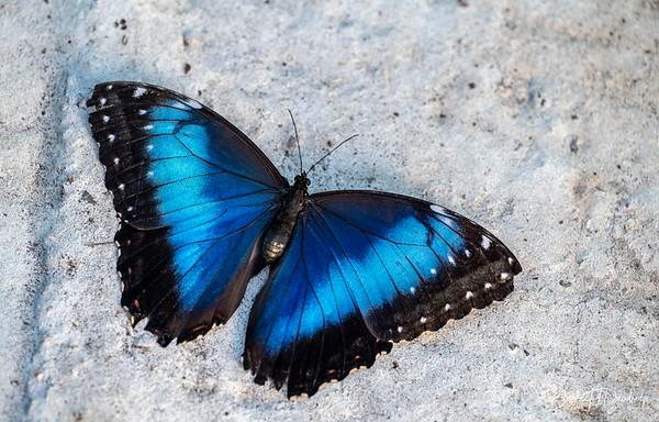 Middleton Butterflies-6529-Edit