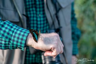 Middleton Butterflies-6569