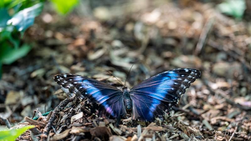 Middleton Butterflies-6506
