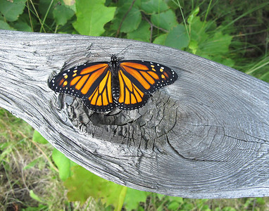 Monarch 10