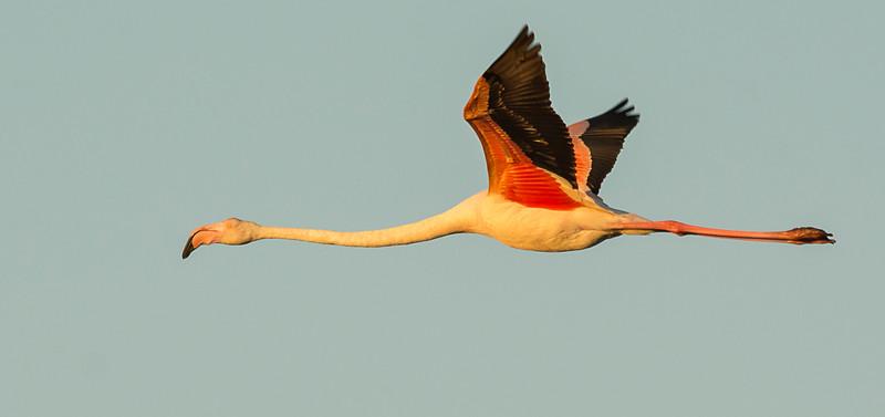 Camargue Birds