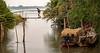 My An Hung Village, Vietnam - Bamboo Bridge