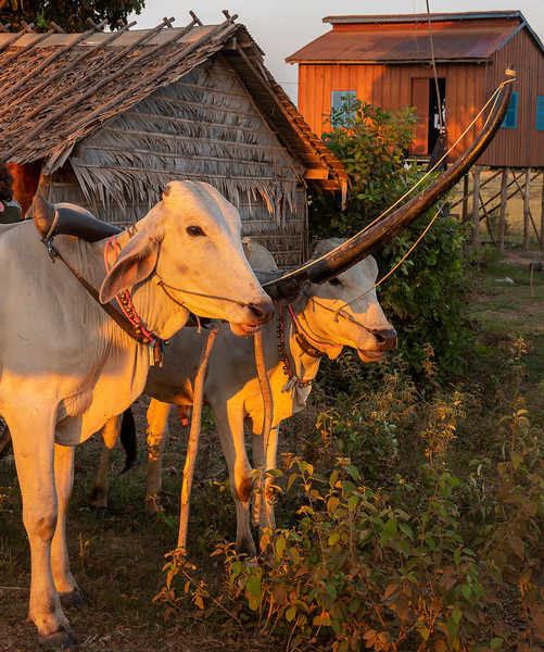 Kampong Tralach - Cambodia