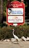 Captiva Island, FL 2013 - Town - Egret