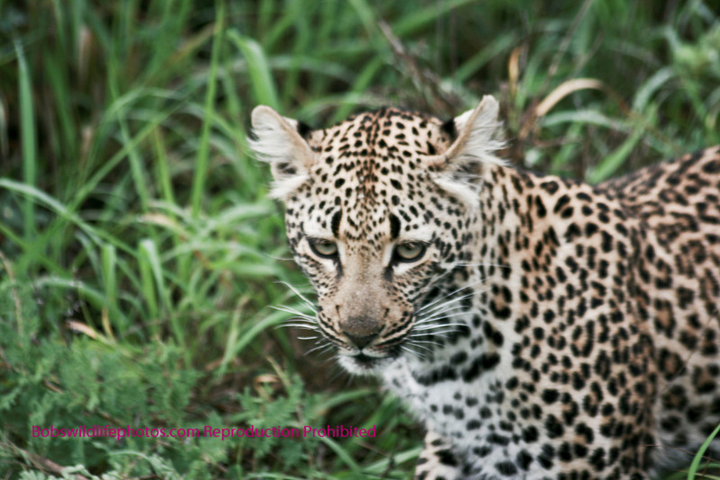 Very young cat near Nkorho