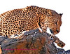 """""""A"""" This photo was taken at the Amani Lodge Namibia."""