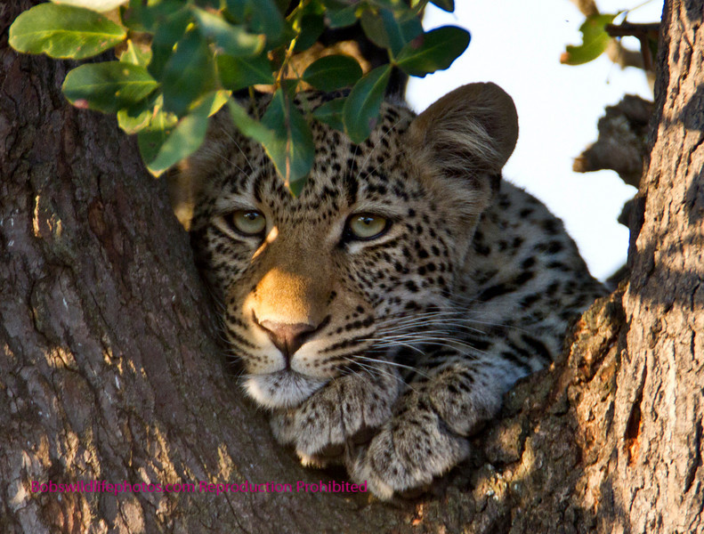 This photo was taken in Kruger not far from Lower Sabie.