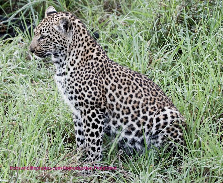 Magnificent animal shot near the Nkorho lodge.