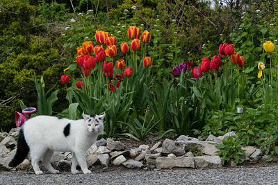 Wally And The Flowers