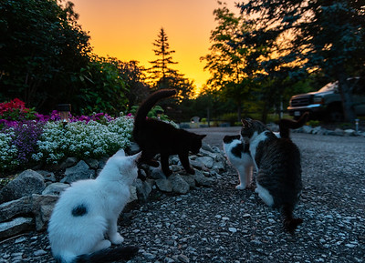 Cats And The Sunset