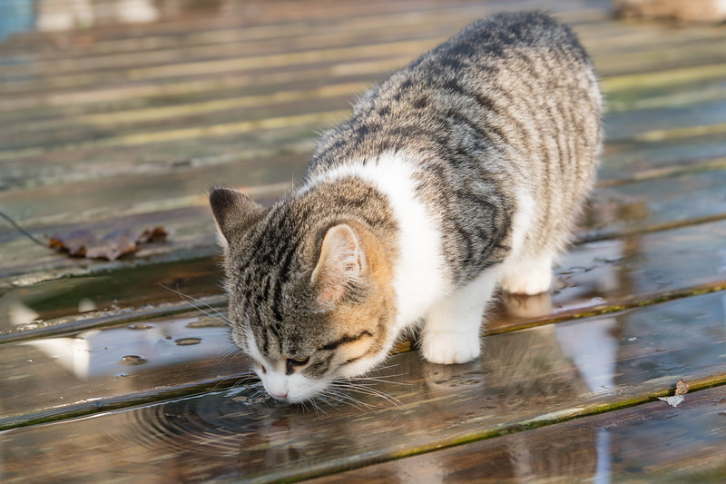 Tabitha Drinking Rain Water