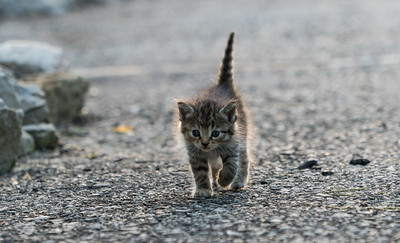 Tabby On The Loose
