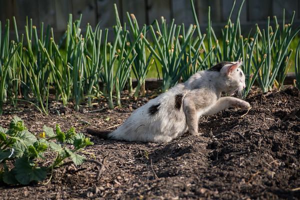 White Cat, Dark Garden