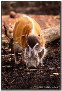 Chester Zoo Animals