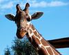 CMZ giraffe 2805 ac sh200
