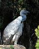 CMZ vulture 2823 al sh200