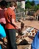 CMZ giraffe 2818 al il6 sh100