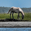 Chincoteague Wild Pony Swim : 3 galleries with 198 photos