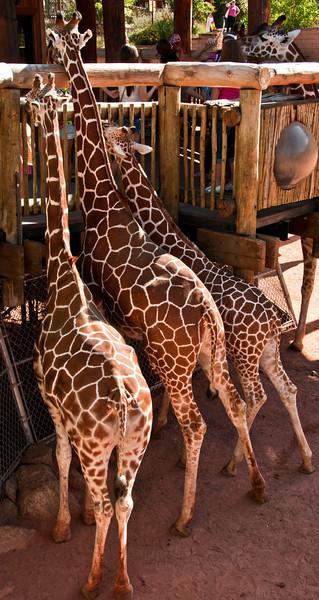 The Cheyenne Mountain Zoo