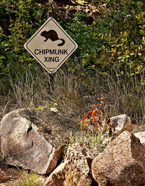 Chipmunk Crossing at Seven Falls in Colorado Springs