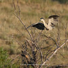Black-crowned Night Heron | 01 | Secret Spot | 2012