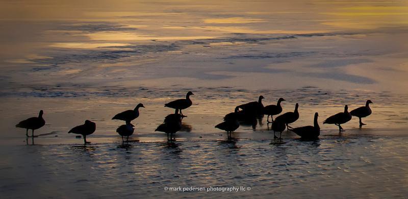 Ducks-at-sunrise