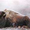 Wildlife 032
