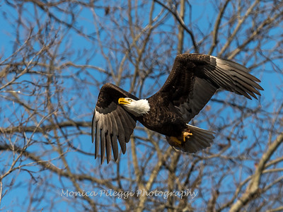 Conowingo Eagles-4 Feb 2017-4685