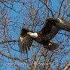 Conowingo Eagles-4 Feb 2017-4685