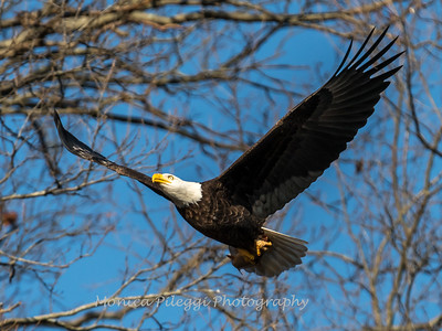 Conowingo Eagles-4 Feb 2017-4686